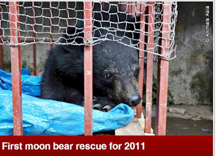 Moon Bear Rescue UK